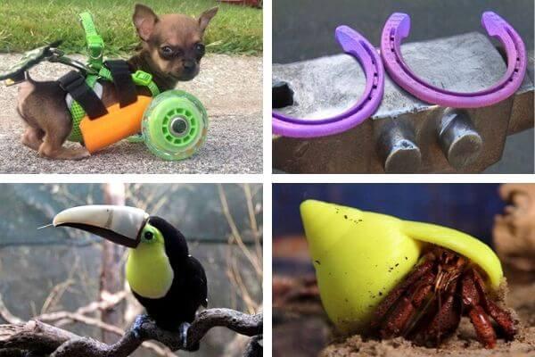 Prothèses 3D pour animaux