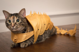 InnoProduct armure 3D pour les chats